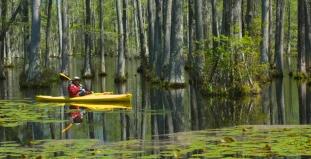 Swamp in Tampa