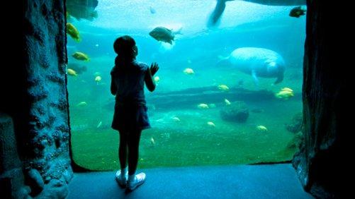 Get Up Close at the Florida Aquarium