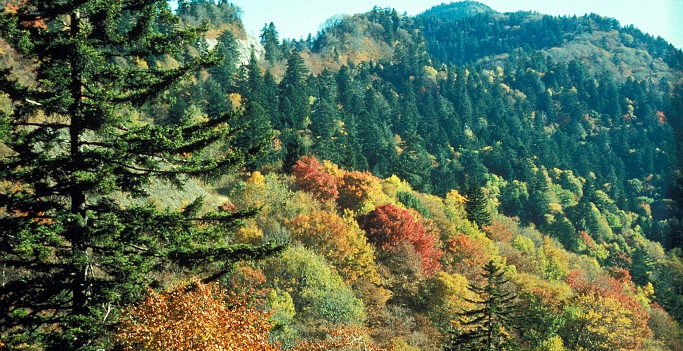 Great Smoky Mountains National Park Vacation Travel Guide
