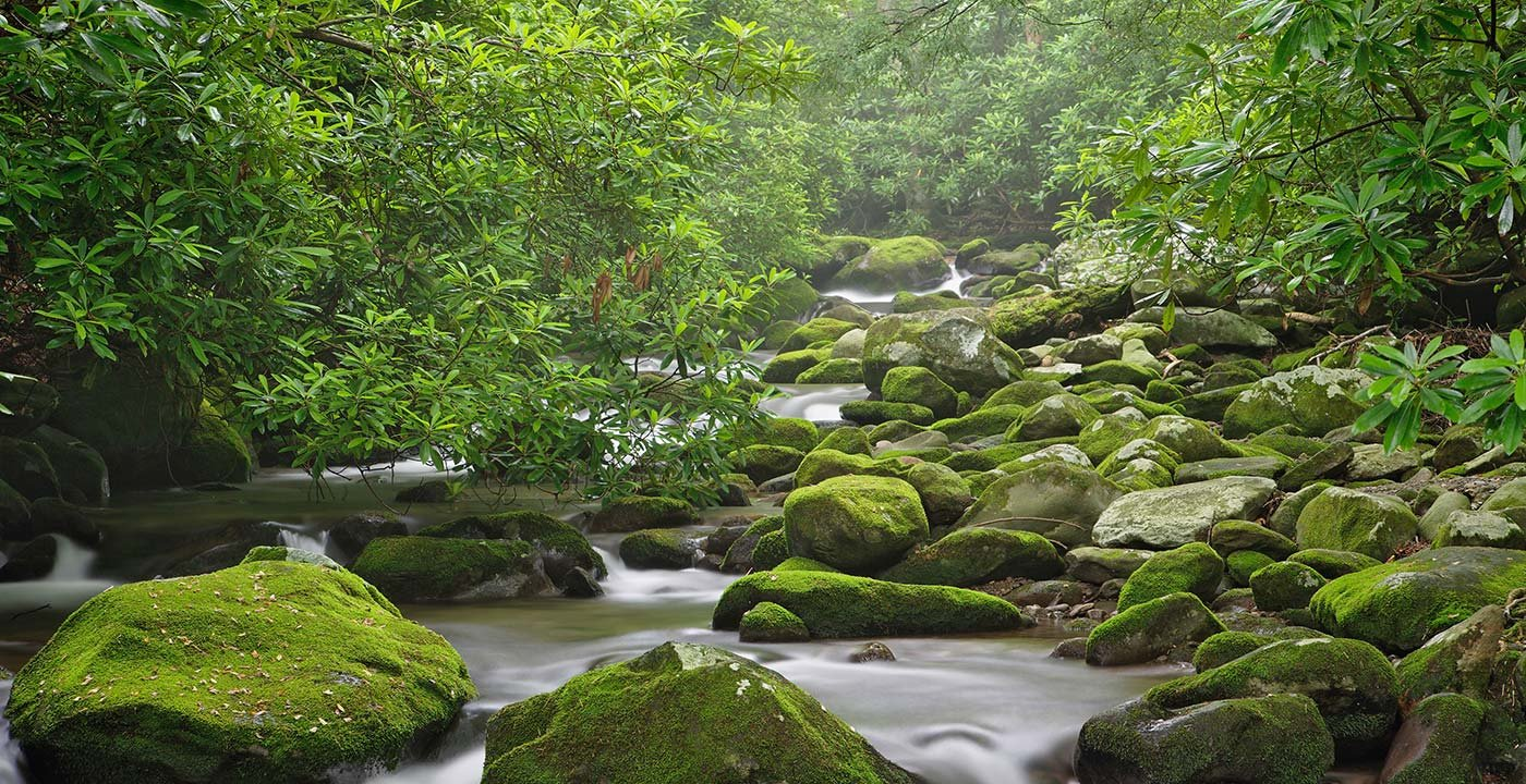 A Scenic Drive on Roaring Fork Motor Nature Trail