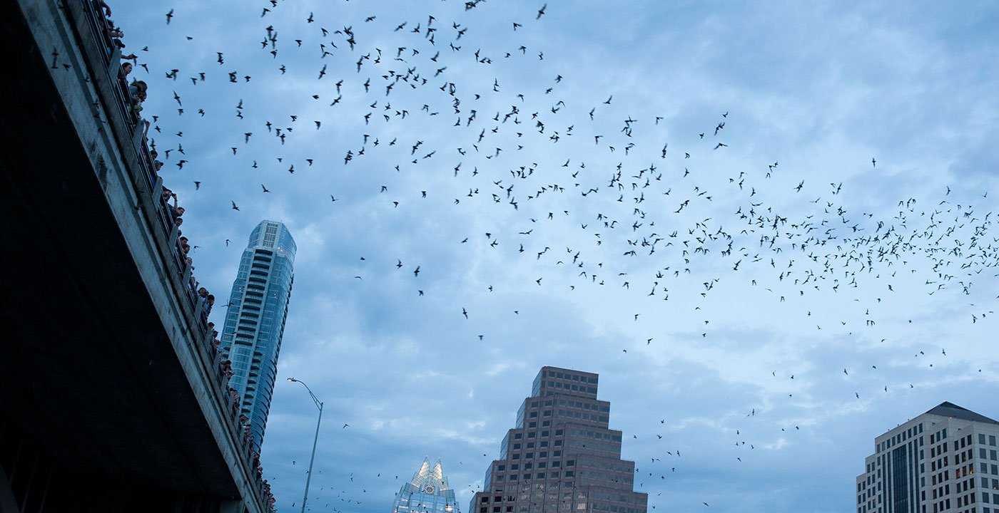 Go Batty in Downtown Austin
