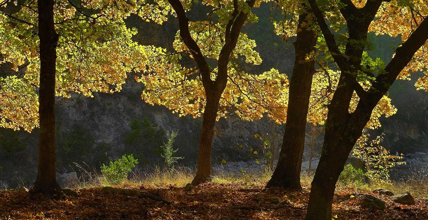 Explore Lost Maples State Natural Area