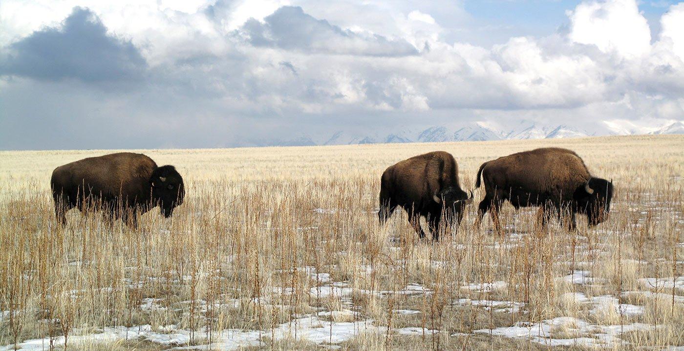 Go Wildlife Watching in Great Salt Lake