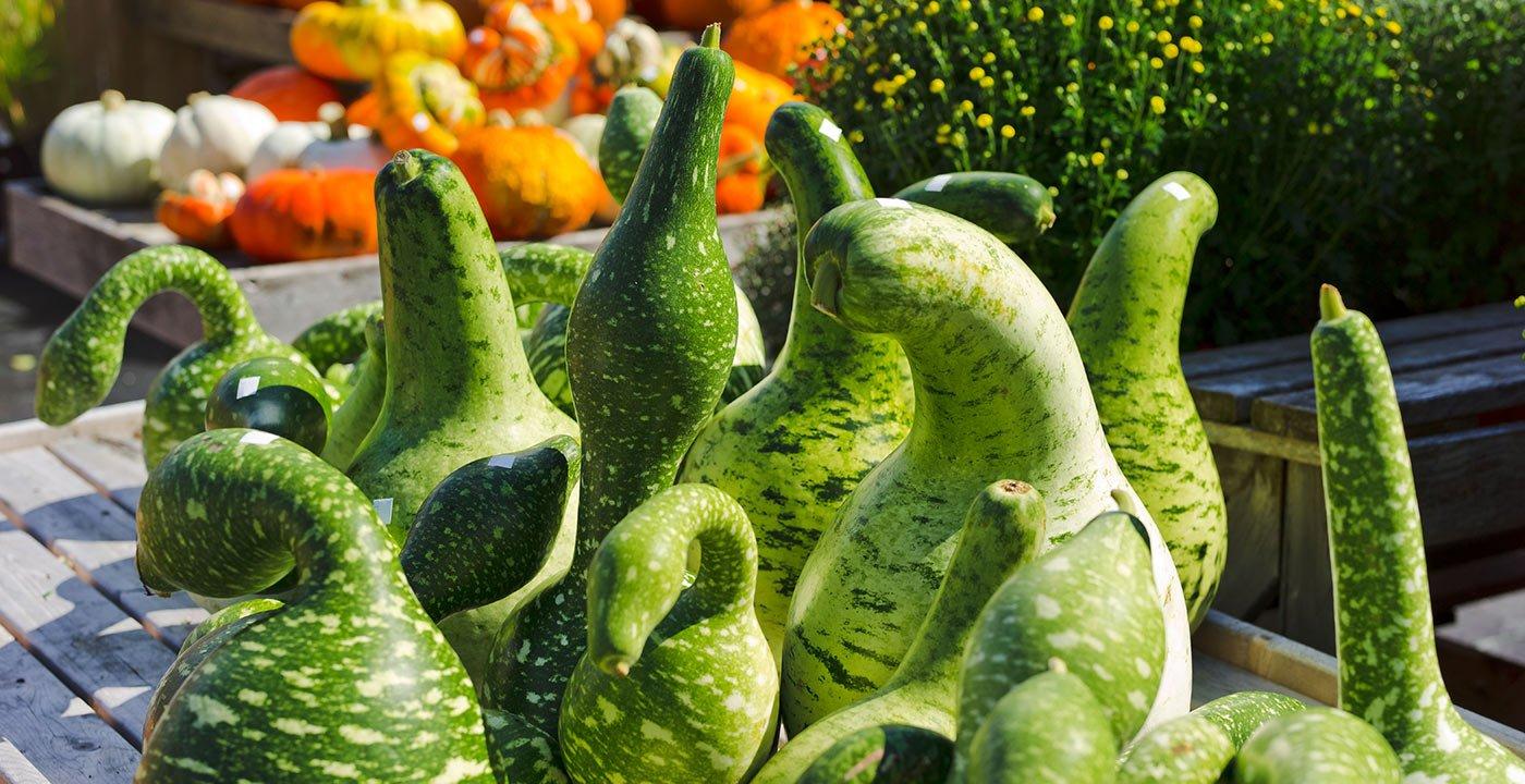 Don't Miss the Woodstock Farmers' Market