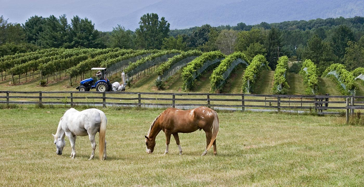 Food and Wine Weekend Getaway in Virginia Wine Country