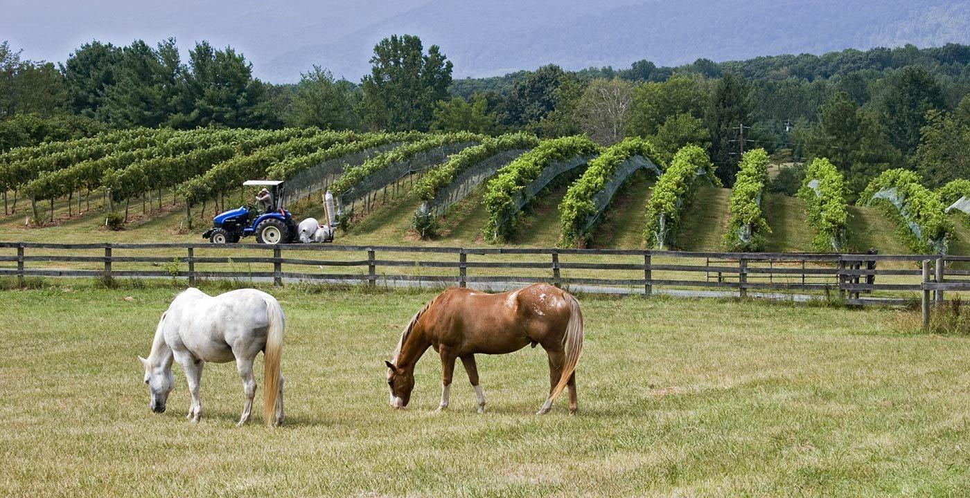 photo of Food and Wine Weekend Getaway in Virginia Wine Country