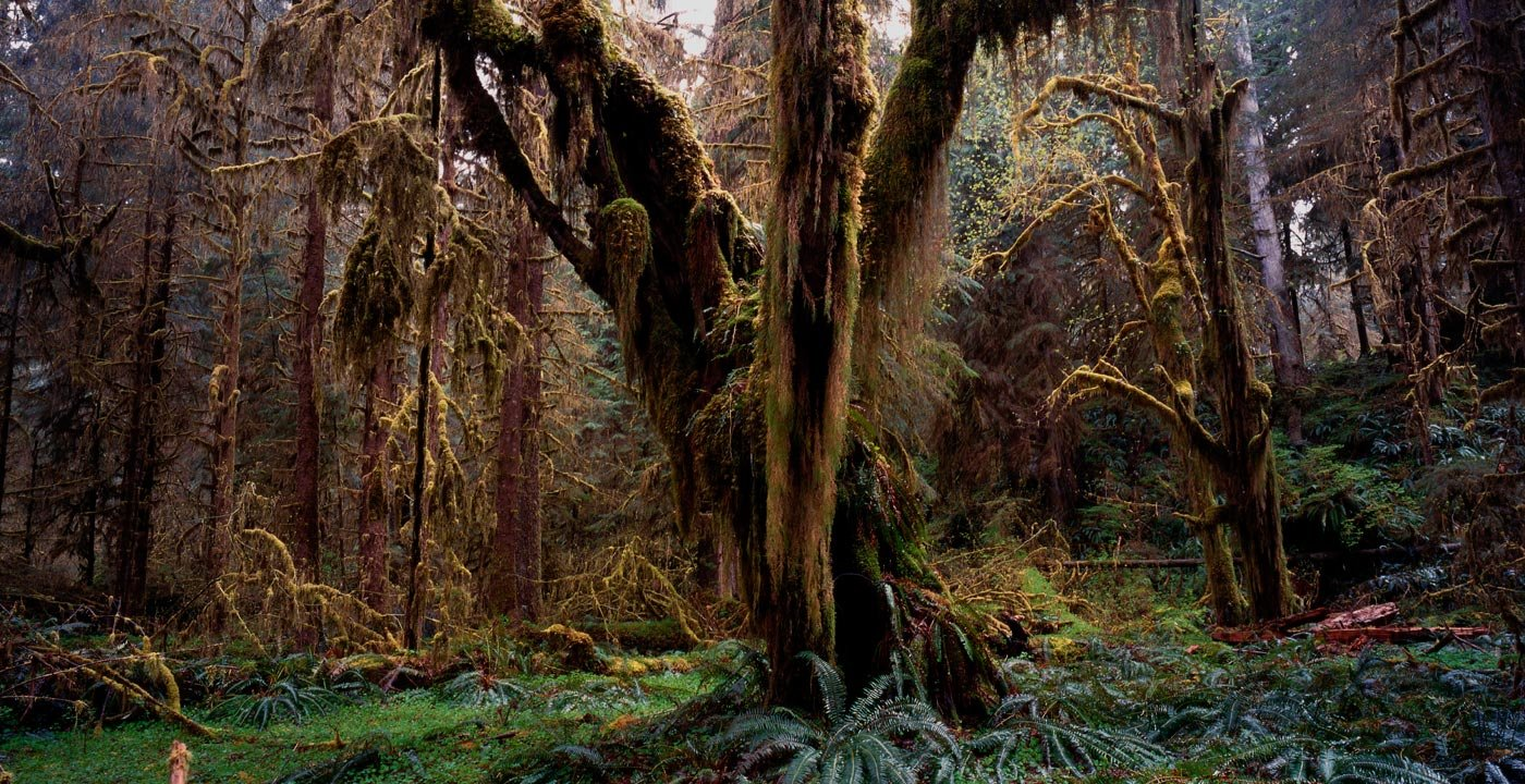 Few Places Are Greener Than the Hoh Rain Forest