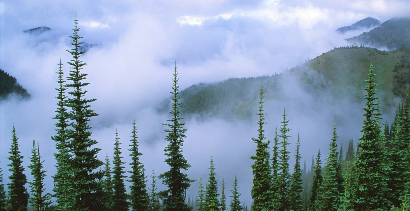 A Viewpoint in the Sky at Hurricane Ridge
