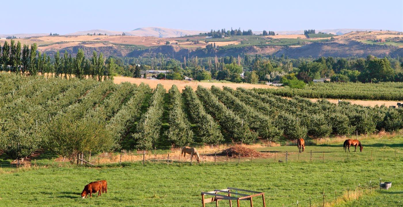 Fields in Yakima Valley