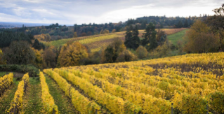 The Willamette Valley and Wine Country