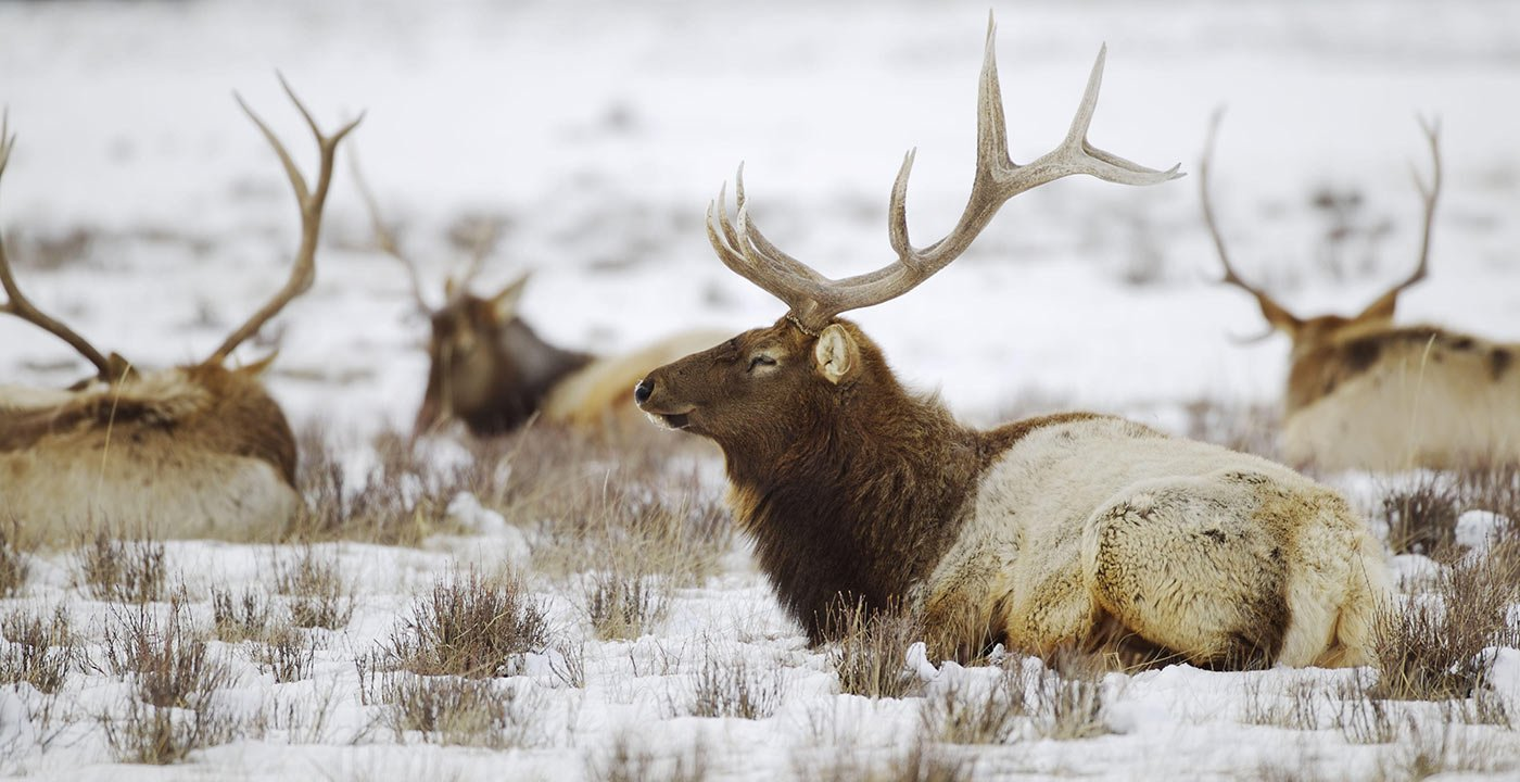 One-of-a-Kind Winter Wildlife Spectacle